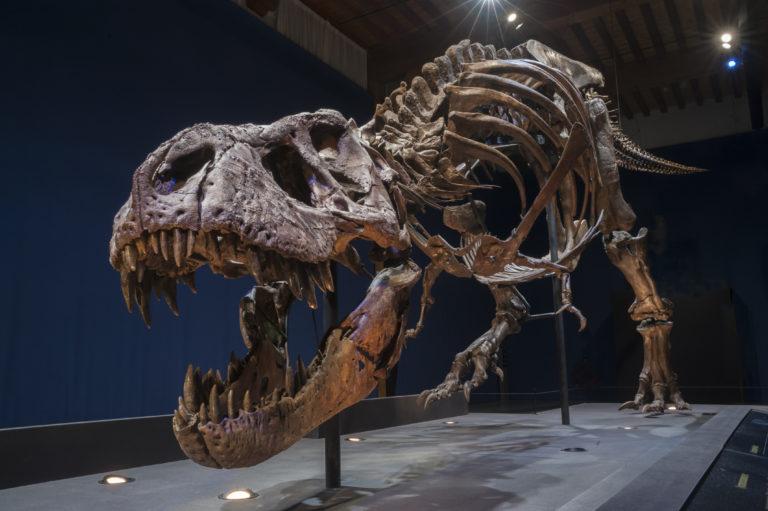 T. rex in Naturalis